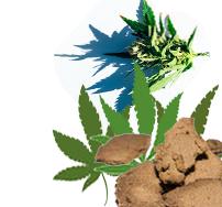 Marijuana, Flowers, Hash